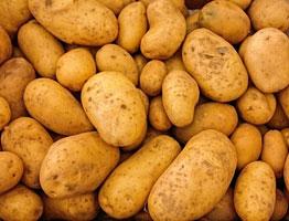 Kartoffeln - regionale Produkte Eisleben
